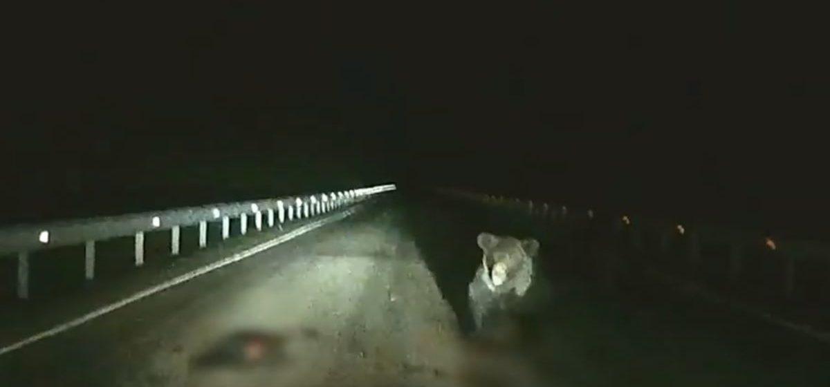 В России разъяренная медведица набросилась на автомобиль, чтобы защитить шедшего по дороге медвежонка. Видеофакт