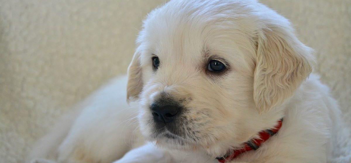 Житель Барановичей перечислил мошеннице деньги за несуществующего щенка