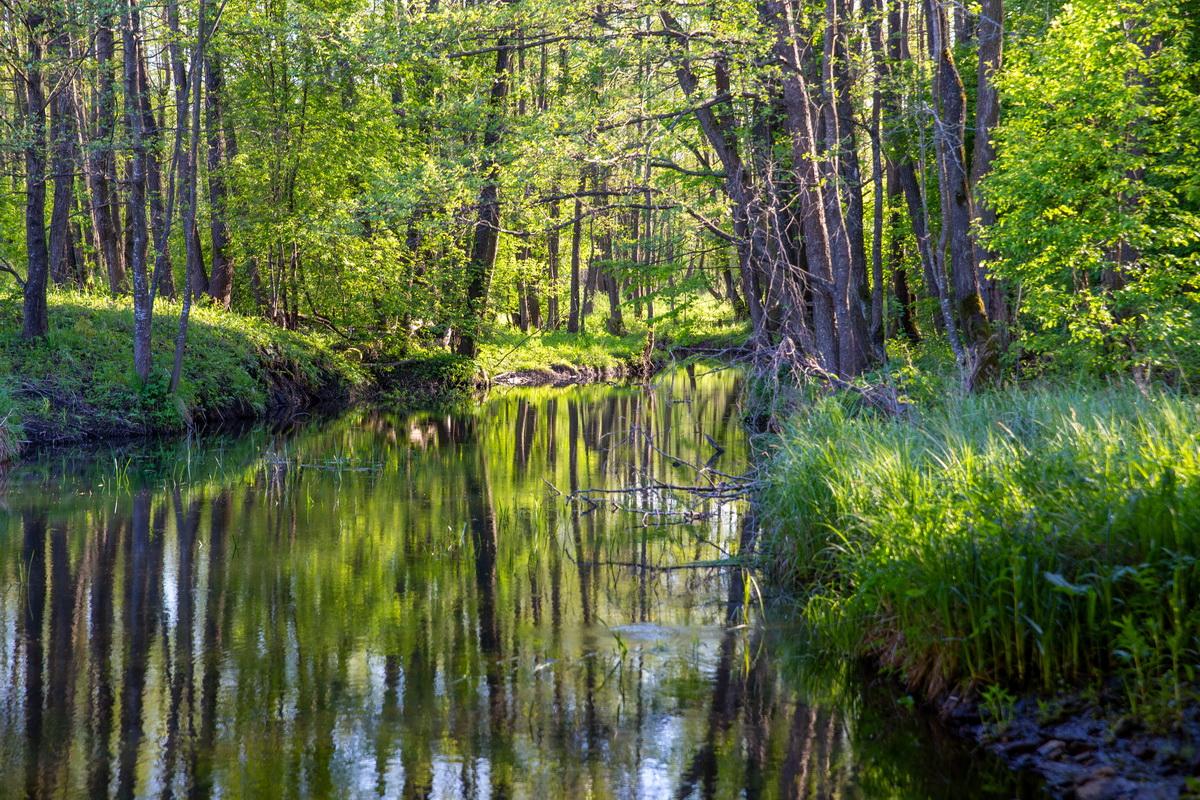 Река Сервечь. Фото: Андрей БОЛКО