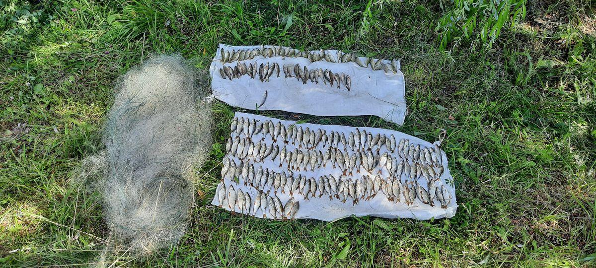 Браконьера, поймавшего сетями 182 рыбы, задержали под Барановичами. Возбуждено уголовное дело