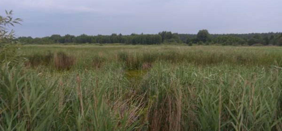 Спасатели вытащили из болота жителя Ляховичского района. Как он увяз в болоте, мужчина объяснить не смог