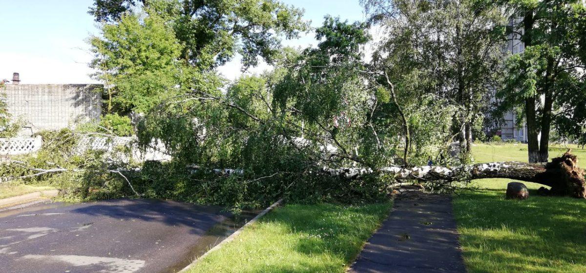 После грозы в Барановичах на проезжую часть упало дерево. Фотофакт