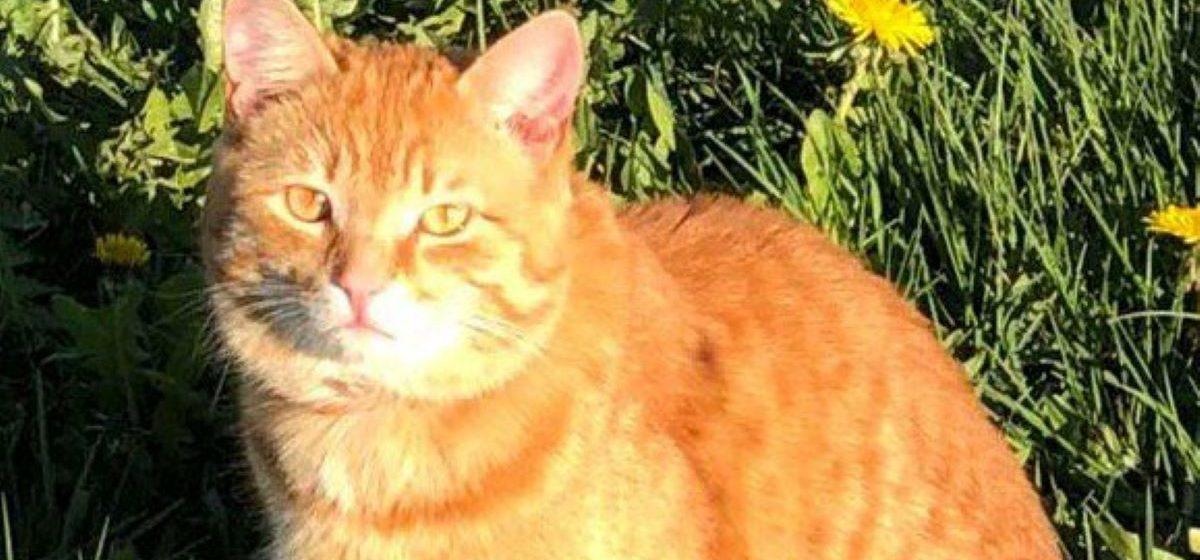 Мэр Бреста создал Telegram-аккаунт, в котором пожаловался, что у него пропал кот