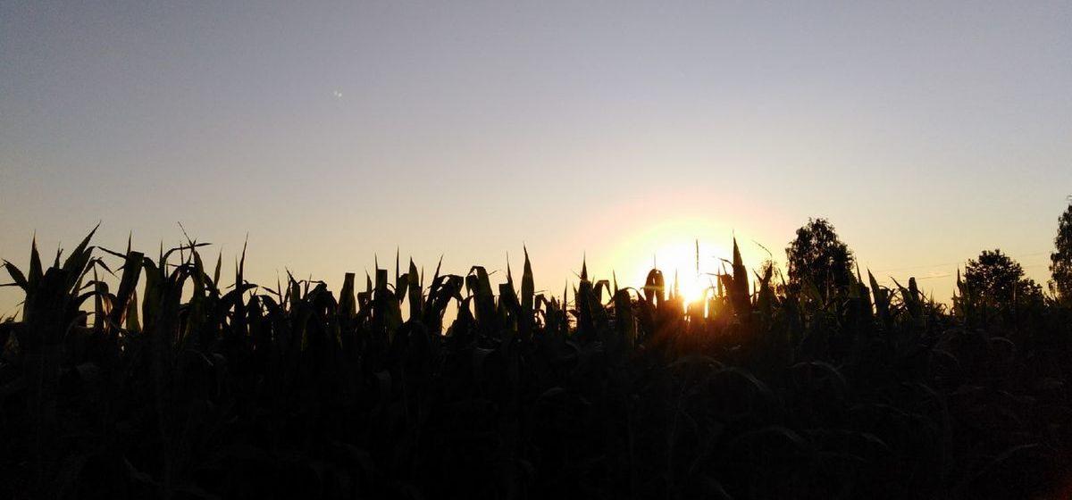 Ждать ли потепления в ближайшие дни? Прогноз погоды в Барановичах на 19–21 сентября