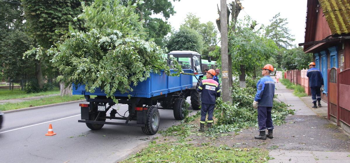 Зачем в центре Барановичей обрезают верхушки деревьев. Фотофакт