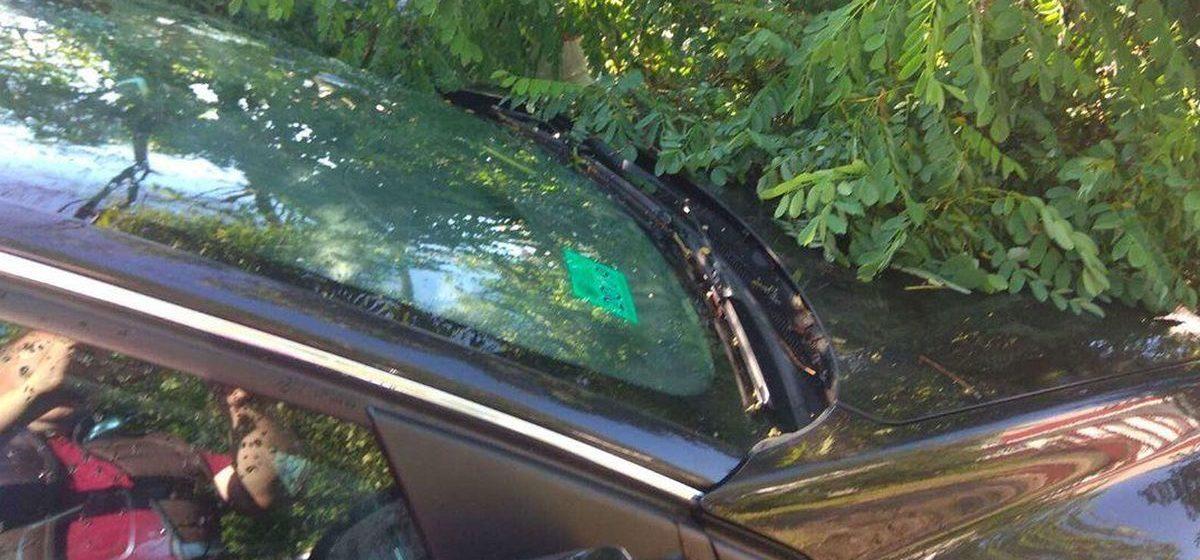 Упавшее дерево повредило две машины на парковке в Барановичах. Фотофакт