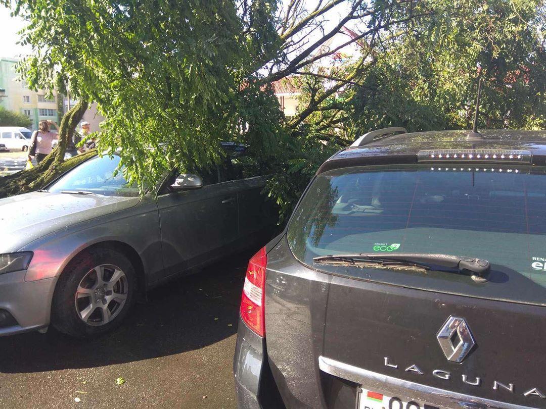 Упавшее дерево повредило две машины на парковке в Барановичах