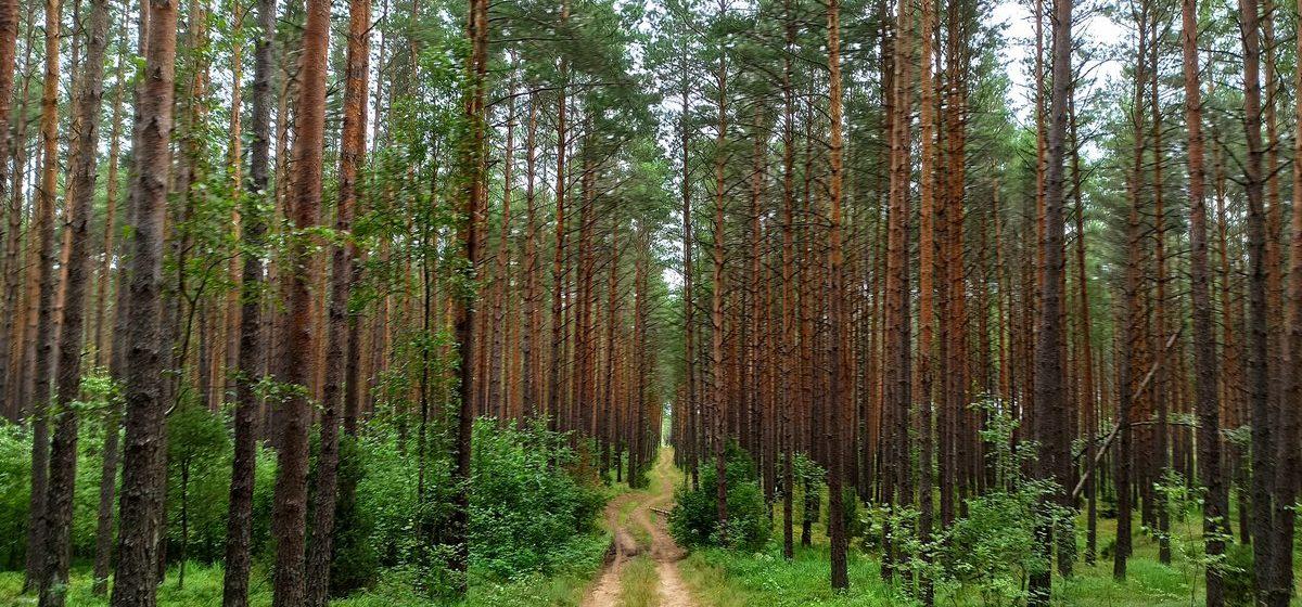 В лесу в Барановичском районе потерялся пенсионер