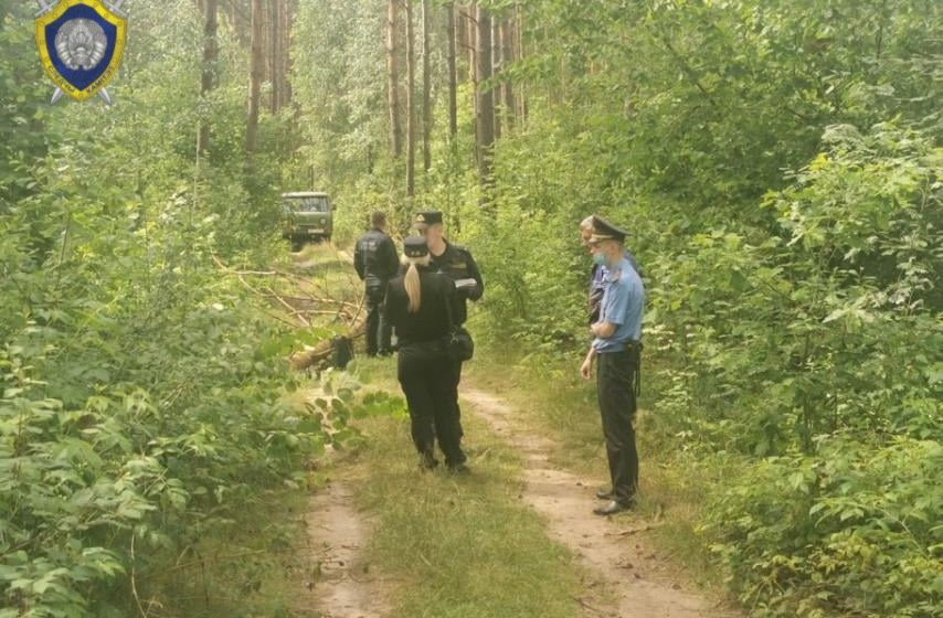 Девушку-подростка раздавило спиленным деревом в Пуховичском районе. Она шла в наушниках по лесной дороге