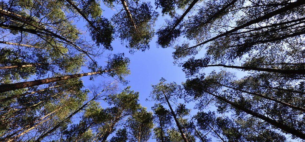 Запрет на посещение лесов введен в Барановичском районе