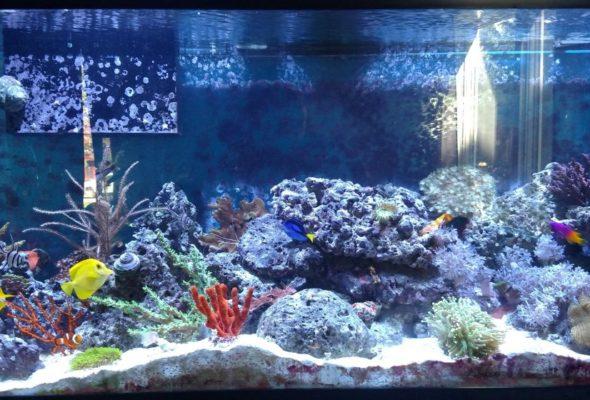 Вода в аквариуме должна быть чистой