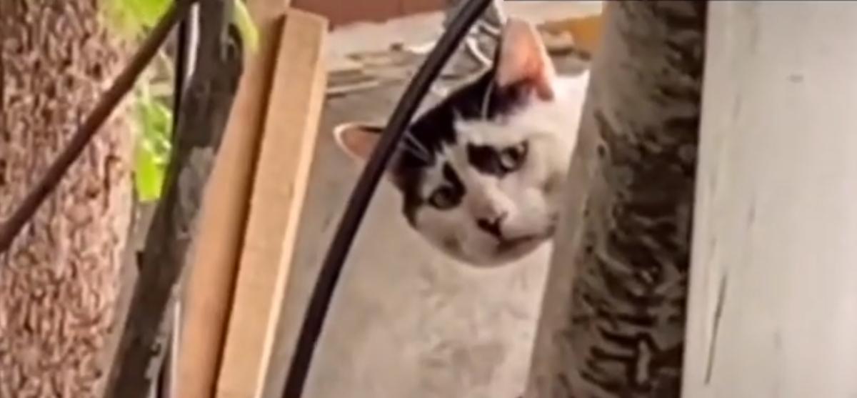 «Грустный кот» из Китая стал новой звездой на YouTube. Увидев его, вы не сможете просто пройти мимо