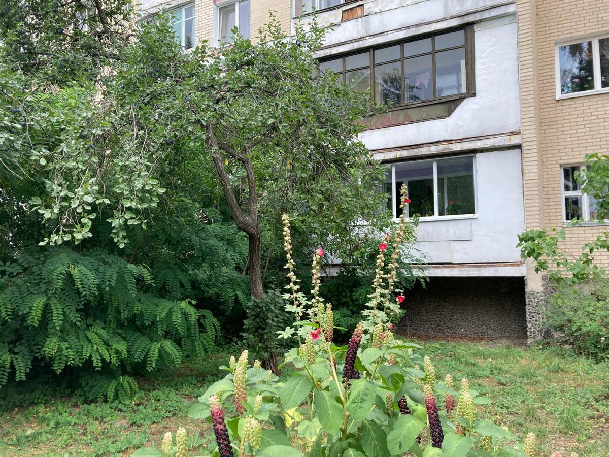 Кустарник около дома на улице Жукова достигает третьего этажа. Фото: Ирина КОМИК