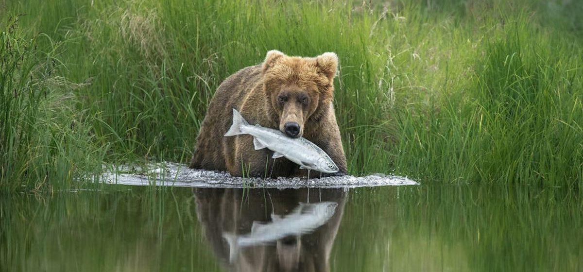 Подборка лучших фотографий дикой природы самого престижного международного конкурса фотографов-натуралистов