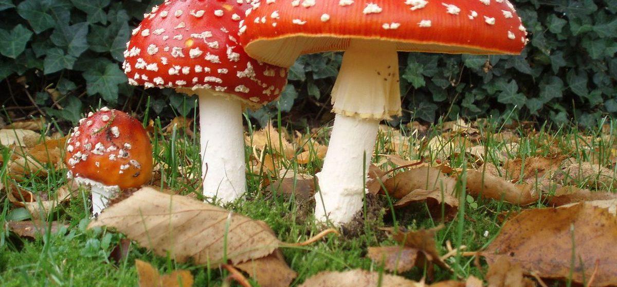 Двое мужчин и ребенок умерли от отравления грибами в Брестской области