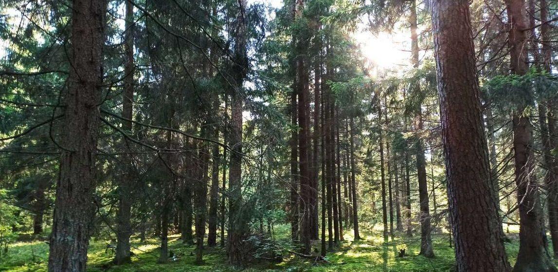 Женщина всю ночь провела в лесу, пытаясь найти дорогу домой в Ляховичском районе