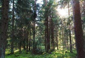 Гриб-мутант нашел в лесу житель Барановичей. Фотофакт