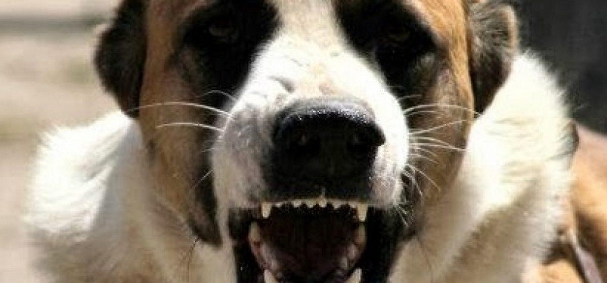 Новости. Главное за 8 сентября: в Минске на акции силовики жестоко задерживали людей, и в Барановичах милиция застрелила собаку, искусавшую двух детей