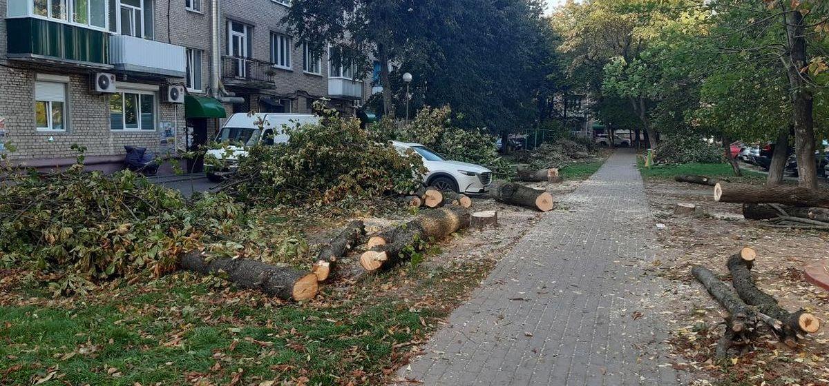 Вырубленные деревья во дворе дома в центре Барановичей. Фото: Елена ЗЕЛЕНКО