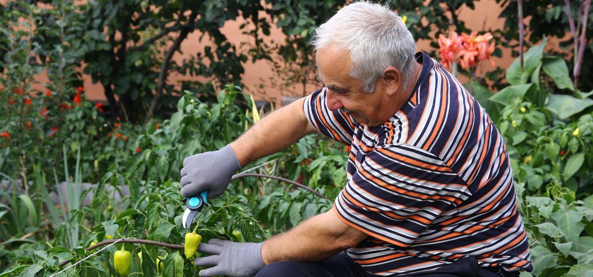 Как помочь дозреть перцам и баклажанам на грядках осенью – эффективные приемы