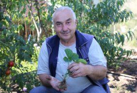 Клубника: как выбрать саженцы и где лучше посадить, чтобы получить хороший урожай