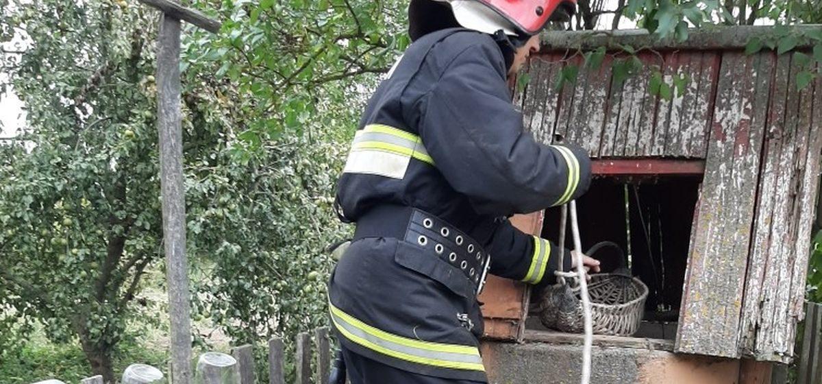 Спасатели необычным способом достали кота из колодца в Барановичском районе