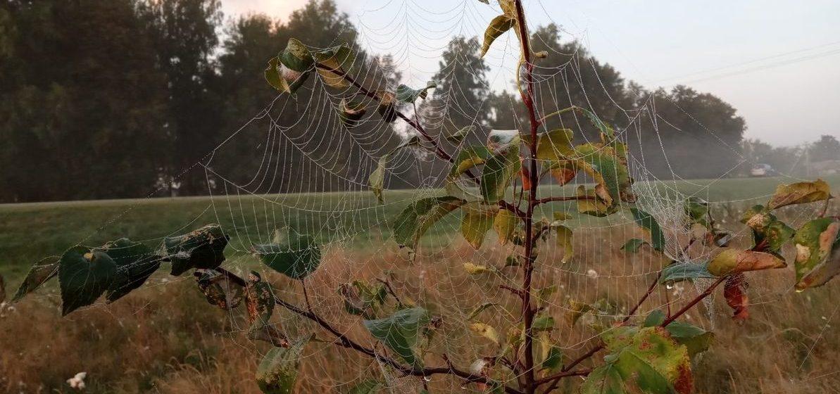 Наладится ли погода в Барановичах 18 ноября?