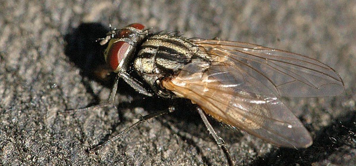 Французский пенсионер взорвал дом, пытаясь убить муху