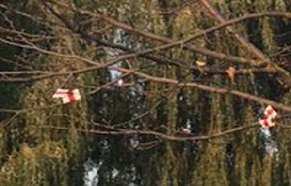 Так ленточки на дереве выглядят при увеличении фото