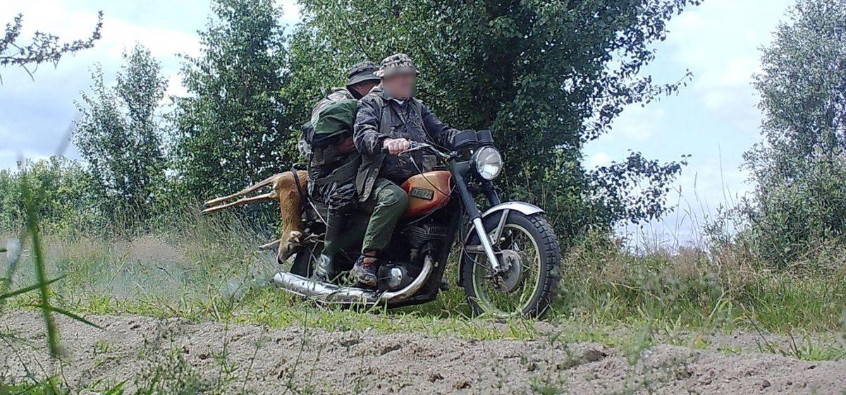 Фотоловушка «поймала» под Ганцевичами двух мужчин, перевозивших на мотоцикле тушу косули