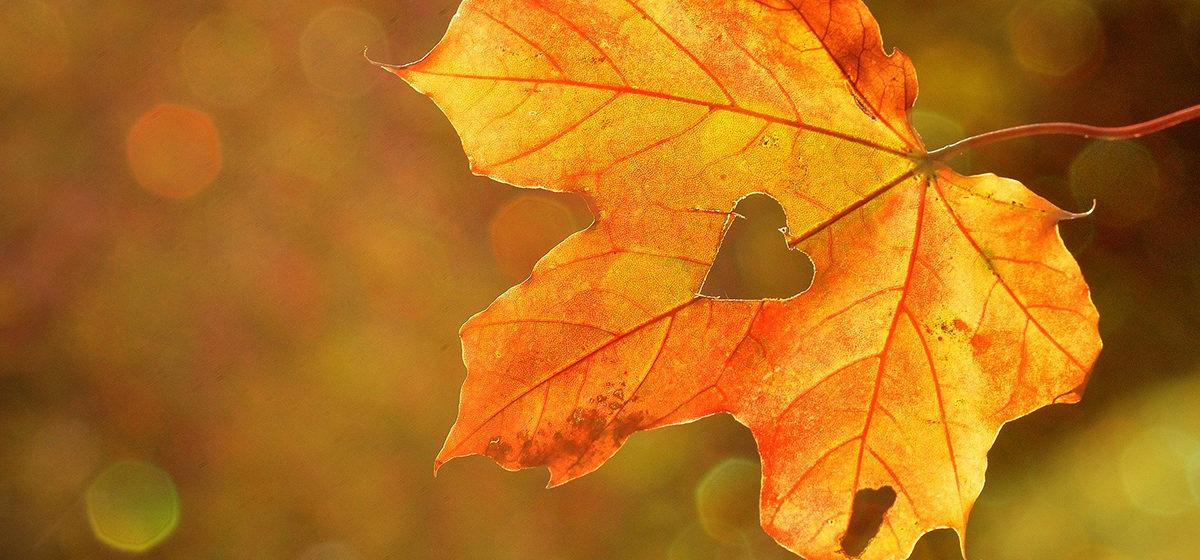 Тест. Как хорошо вы помните песни прошлых лет про осень?