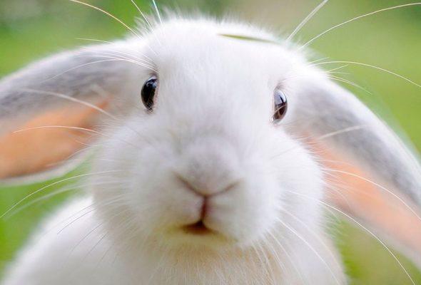Кролики, как известно, капризны в еде