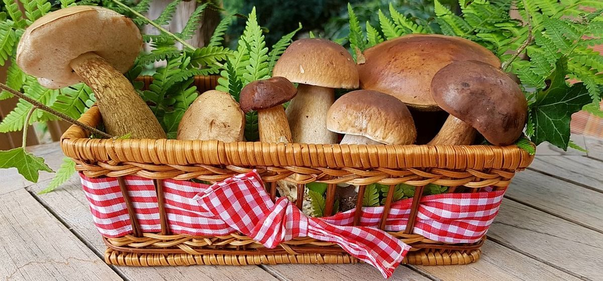 Тест. Лисичка или поганка? Как вы разбираетесь в грибах?