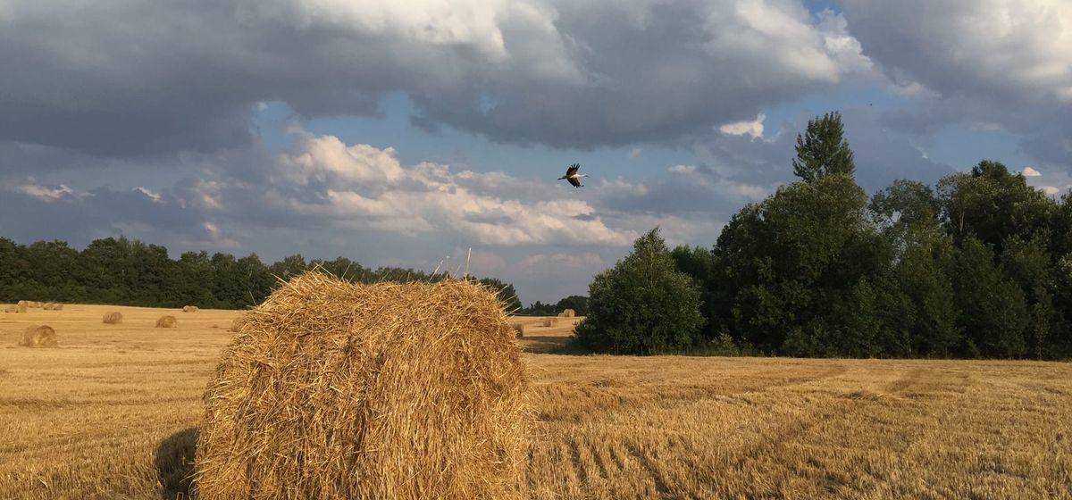 Какой будет погода в Барановичах в последнее воскресенье сентября?