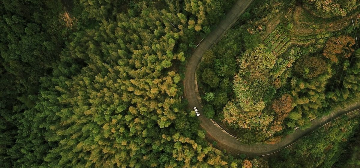 Снят запрет на посещение лесов в Барановичском районе
