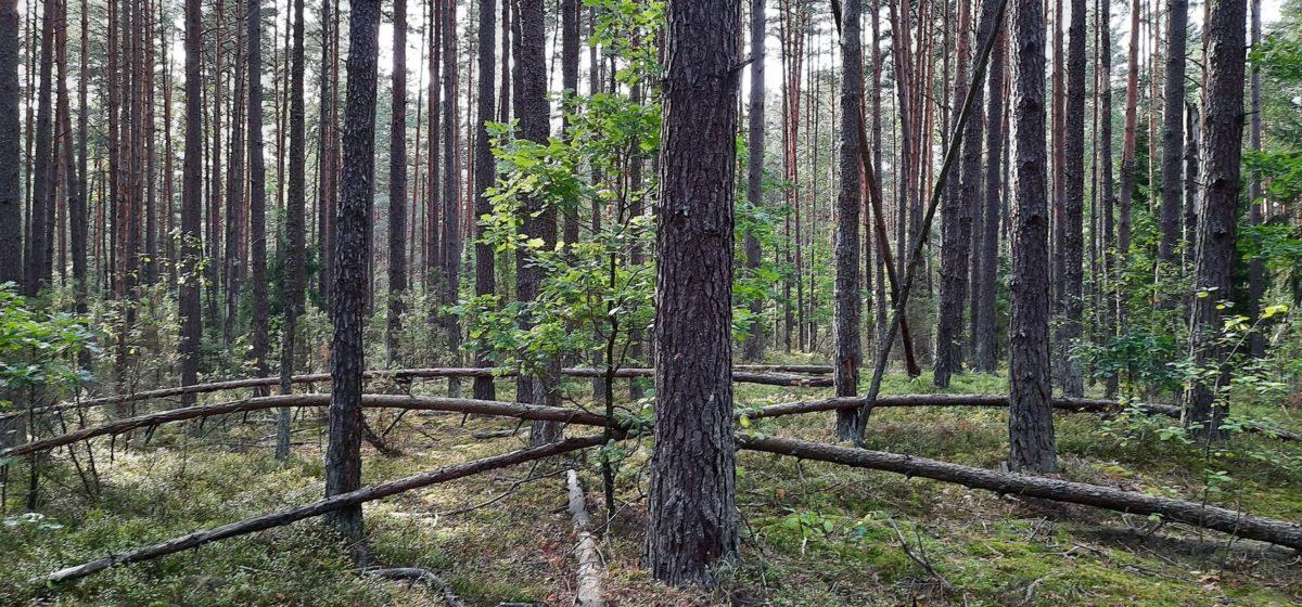 Снят запрет на посещение лесов в Барановичском районе. Он действовал всего сутки