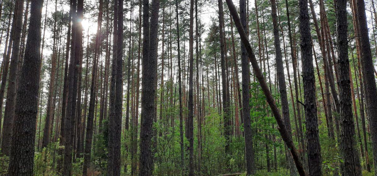 Жительница Барановичей пошла в лес за грибами, а нашла артиллерийский снаряд