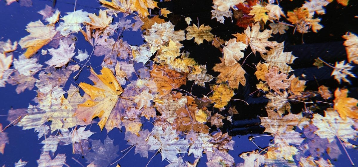 Потеплеет ли в ближайшие дни в Барановичах? Прогноз погоды на 20–22 октября