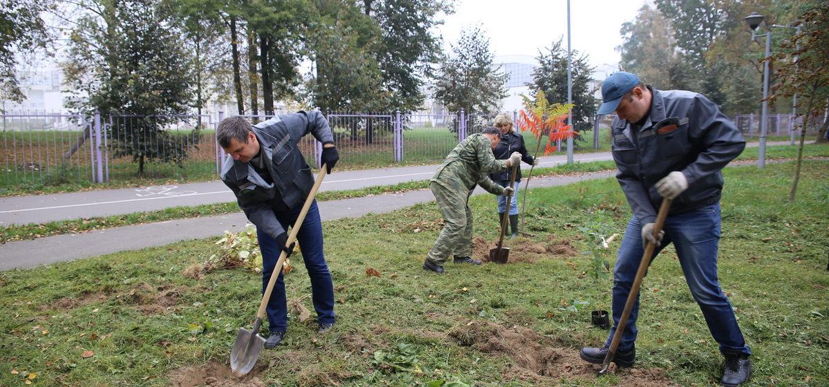 Как прошла акция «День озеленения» в Барановичах