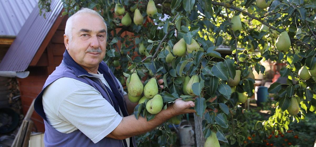 Чем подкормить плодовые деревья осенью и как это правильно сделать