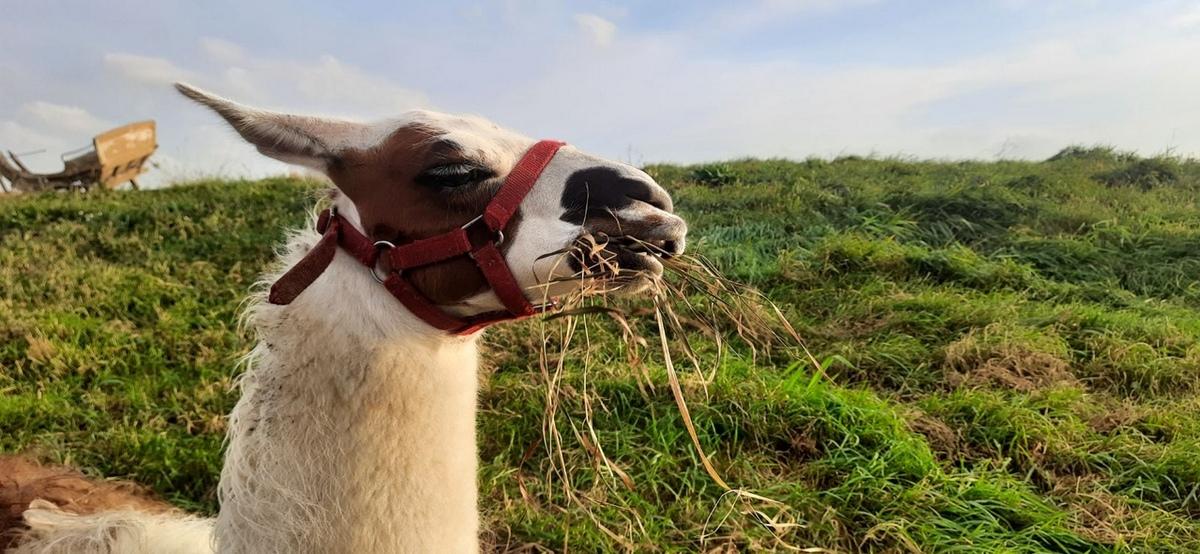Страусы, еноты, верблюды и не только. Фоторепортаж из барановичского Парка животных