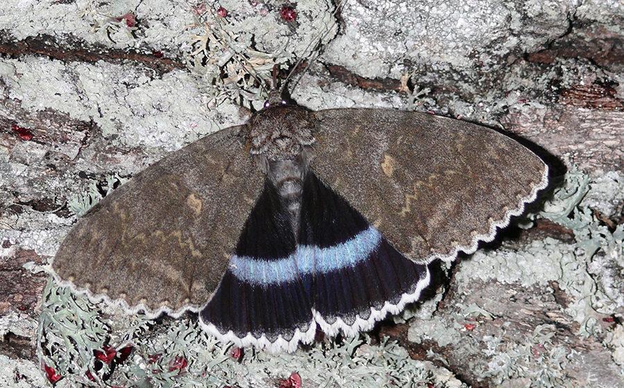 Бабочку размером с птицу нашли в Чернобыле