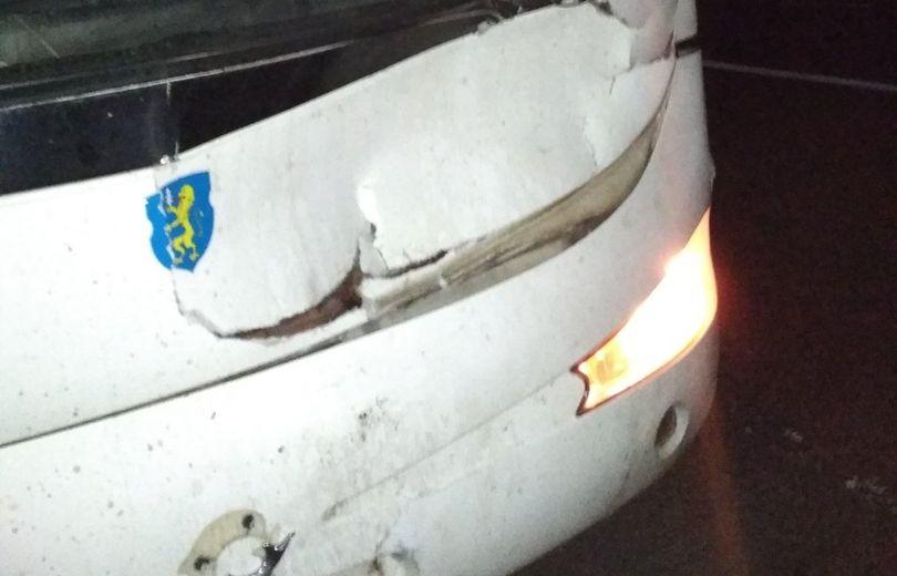 Автобус с футболистами столкнулся с лосем под Барановичами