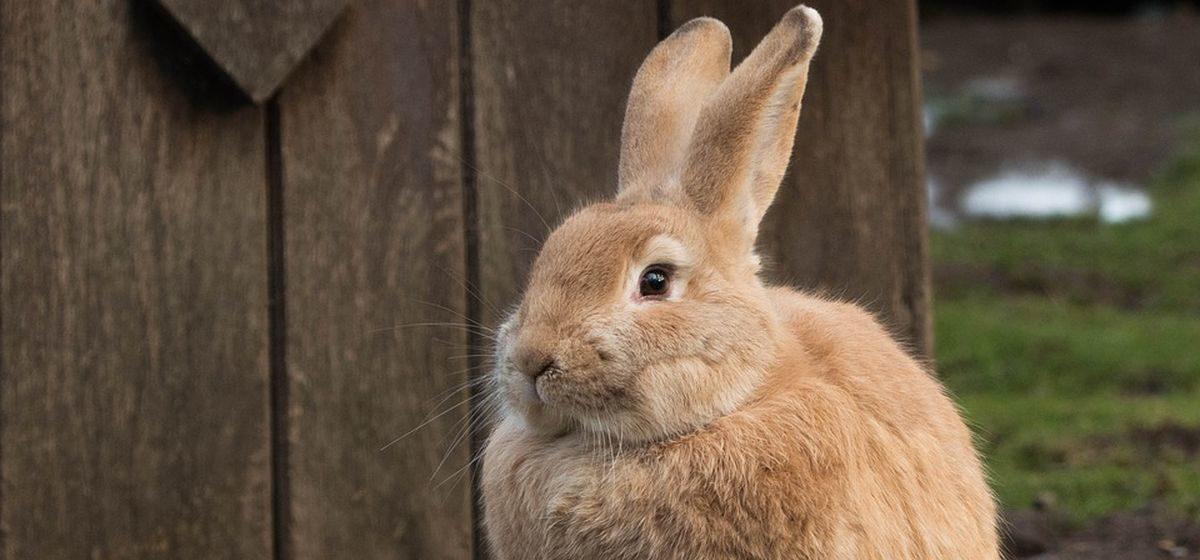 С 3 октября откроется сезон охоты на зайцев. Сколько стоит путевка