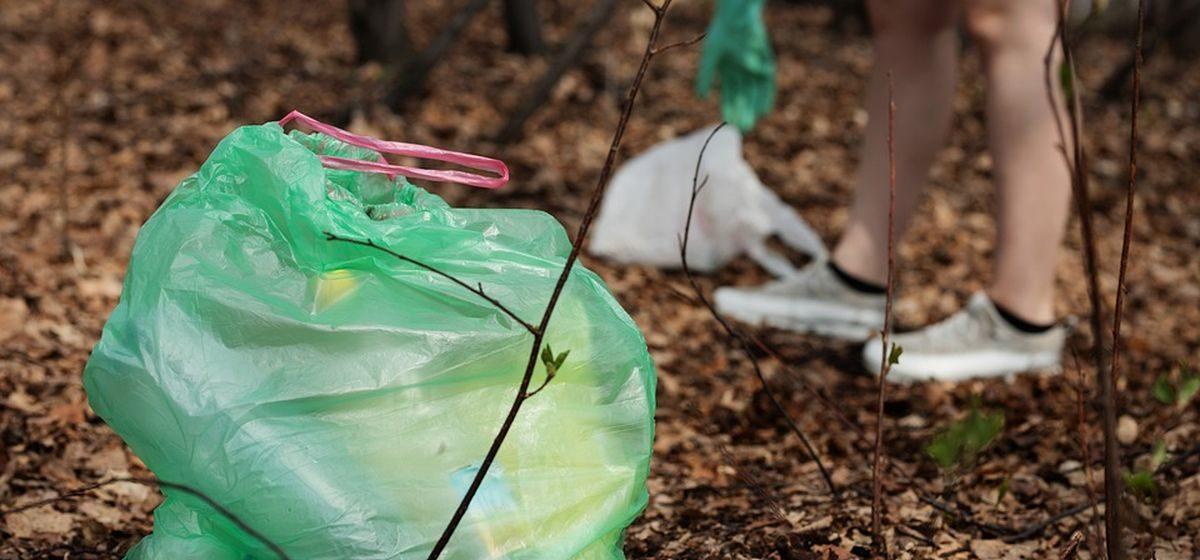 Помочь в уборке леса приглашает всех желающих Барановичский лесхоз