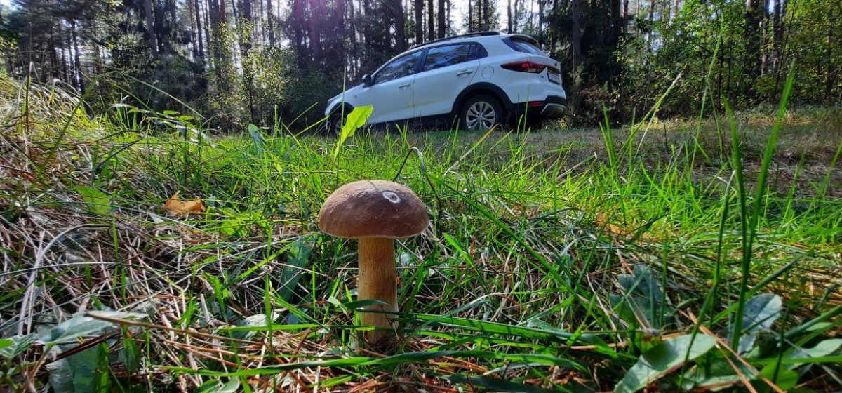 Испытано на себе. Как я собирала грибы. «За три дня проехали 450 км»