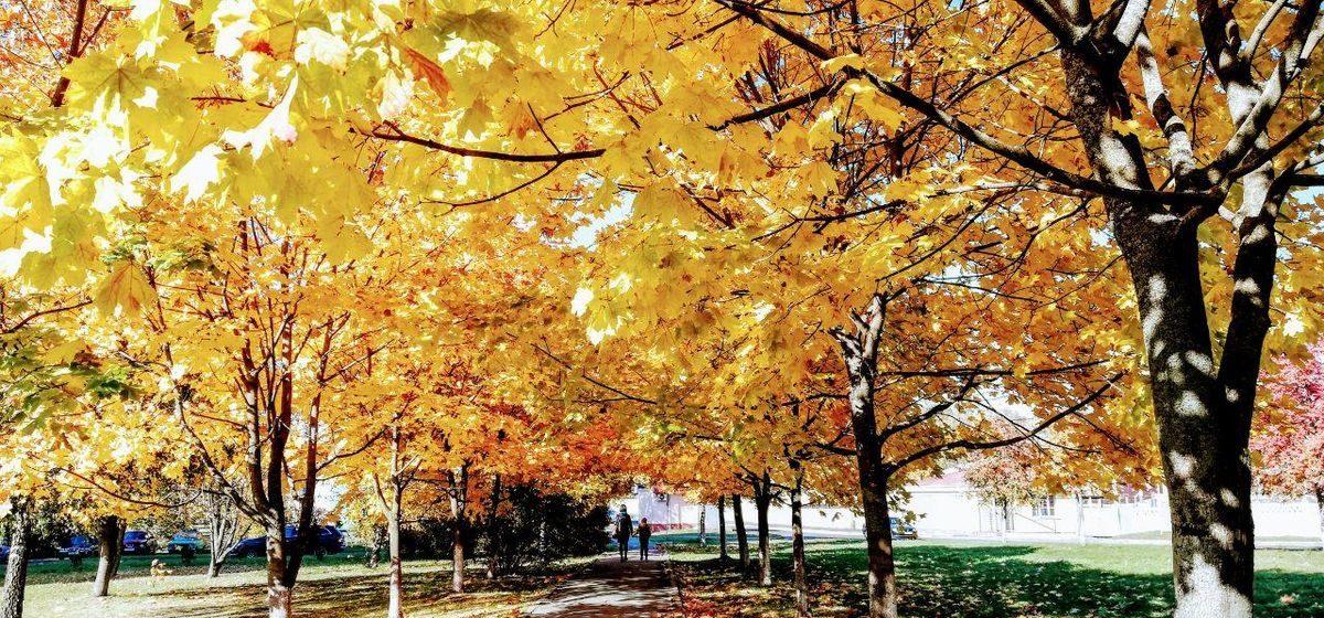 Ждать дождя или солнца в выходные? Прогноз погоды на 24–26 октября в Барановичах
