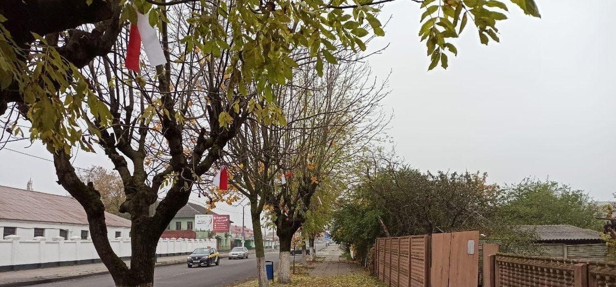 Деревья возле рынка в Барановичах украсили бело-красно-белыми лентами. Фотофакт