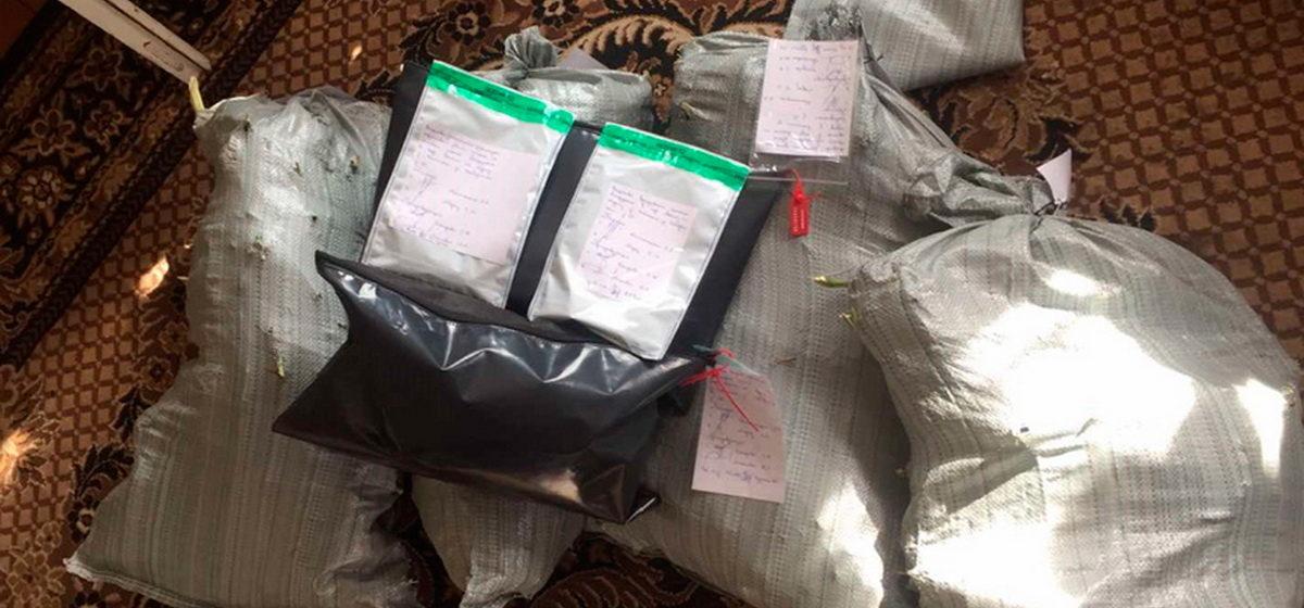 Более 8 кг марихуаны хранил брестчанин в пустующем доме