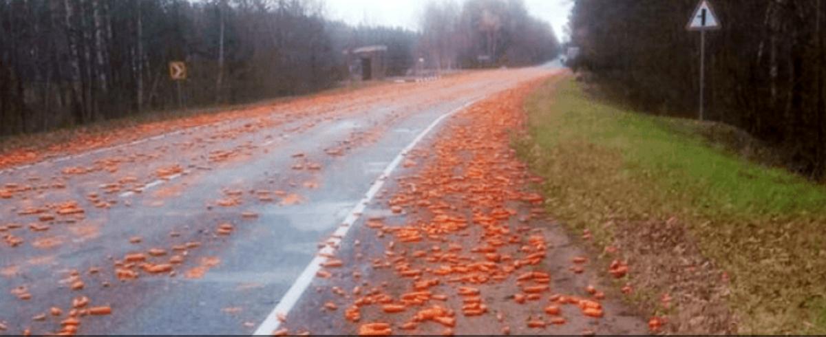 Морковная дорога появилась в Брестской области. Фотофакт